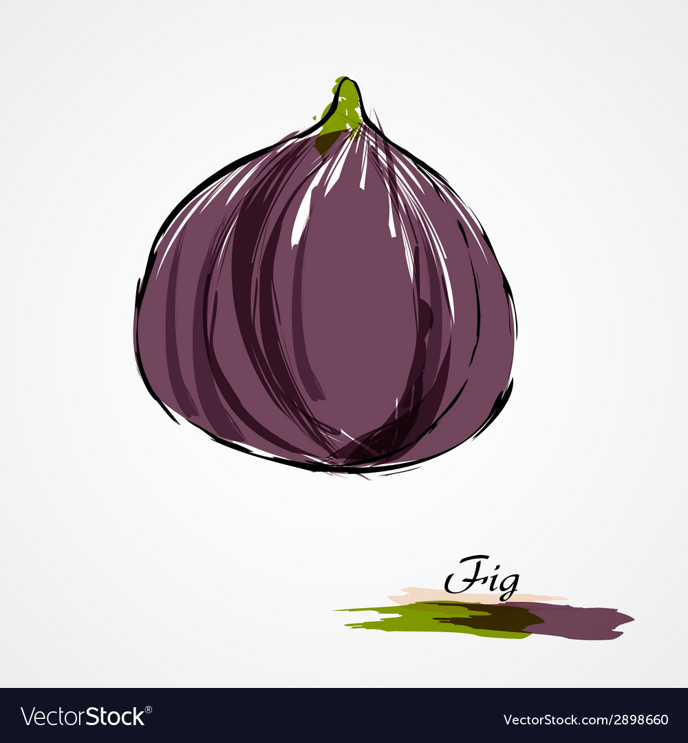 Fig whole vector | Price: 1 Credit (USD $1)