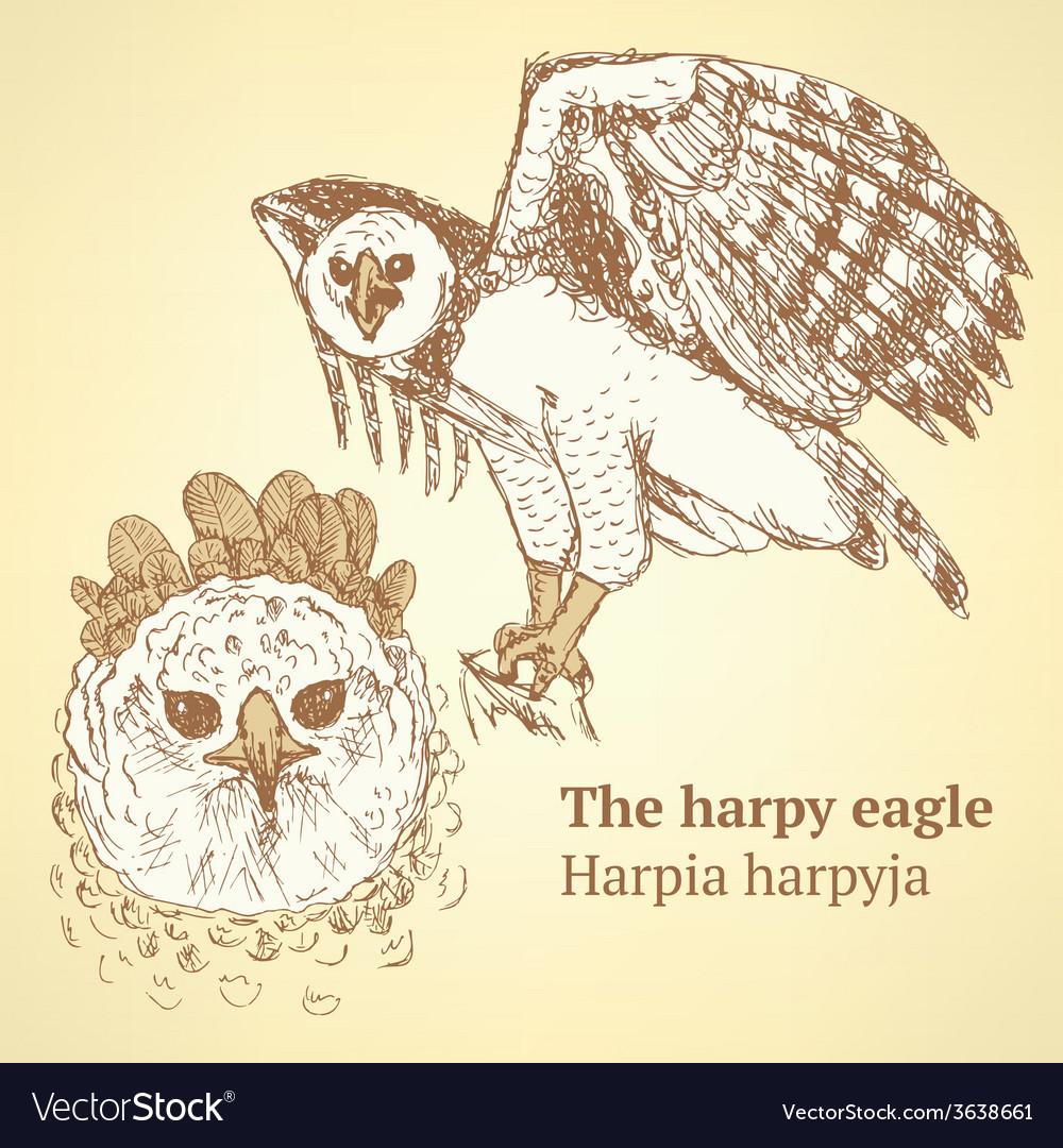 Sketch harpia bird head in vintage style vector | Price: 1 Credit (USD $1)