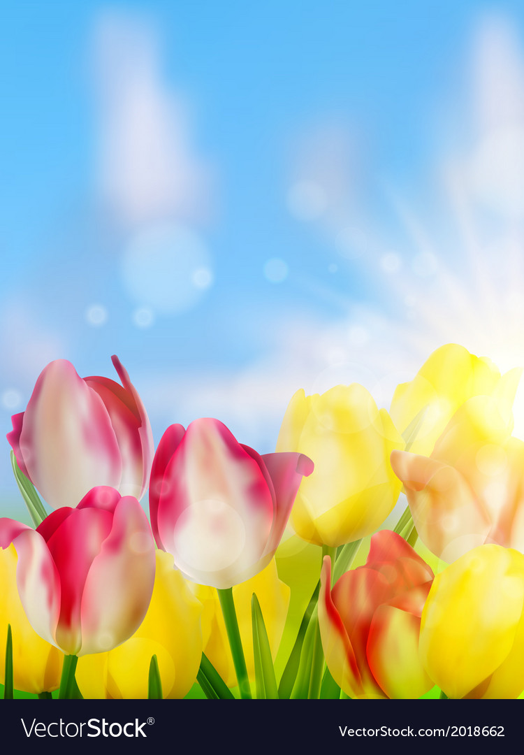 Purple and yellow tulips against the sky eps 10 vector   Price: 1 Credit (USD $1)