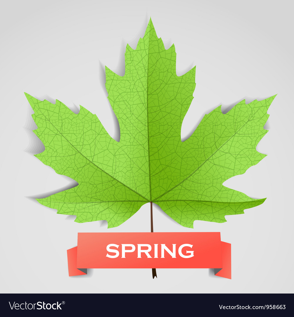 Maple leave with spring banner vector | Price: 1 Credit (USD $1)