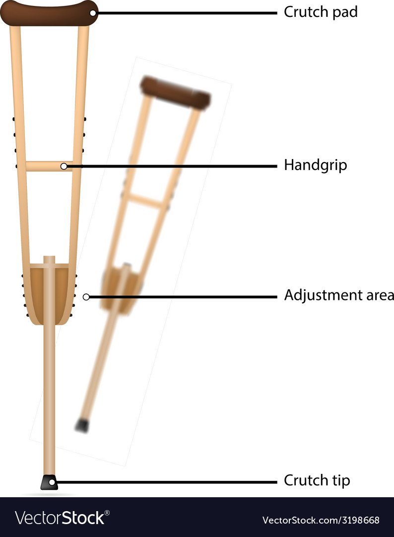 Crutch with explanations vector | Price: 1 Credit (USD $1)