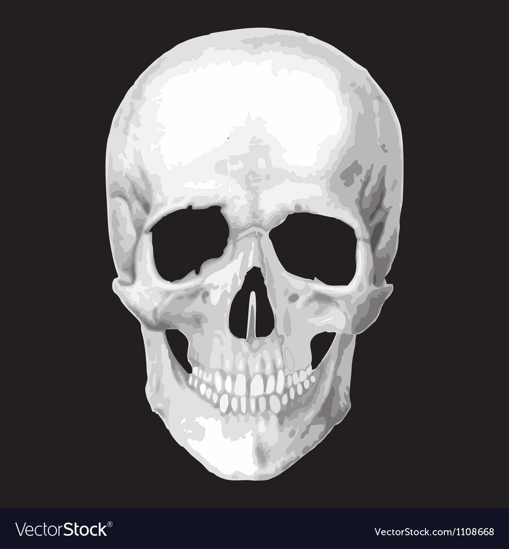 Human skull model object vector | Price: 1 Credit (USD $1)