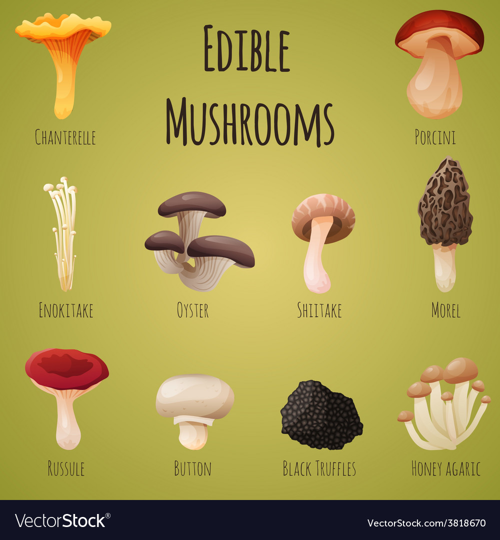 Edible mushroom vector | Price: 1 Credit (USD $1)