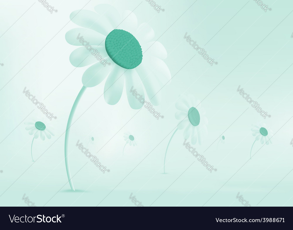Daisies growing in a meadow everything is covered vector | Price: 1 Credit (USD $1)
