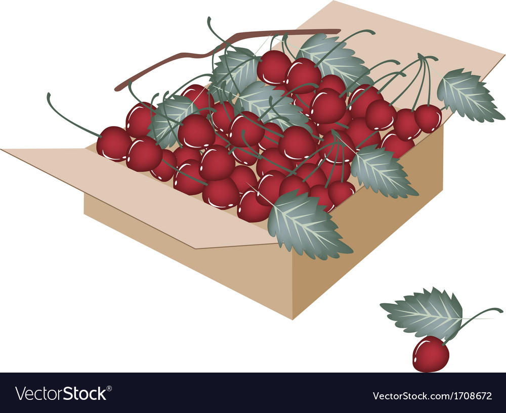 Sweet red cherries in a shipping box vector | Price: 1 Credit (USD $1)