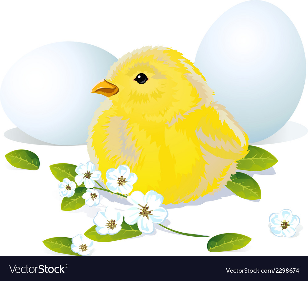 Easter chicken and eggs vector | Price: 1 Credit (USD $1)