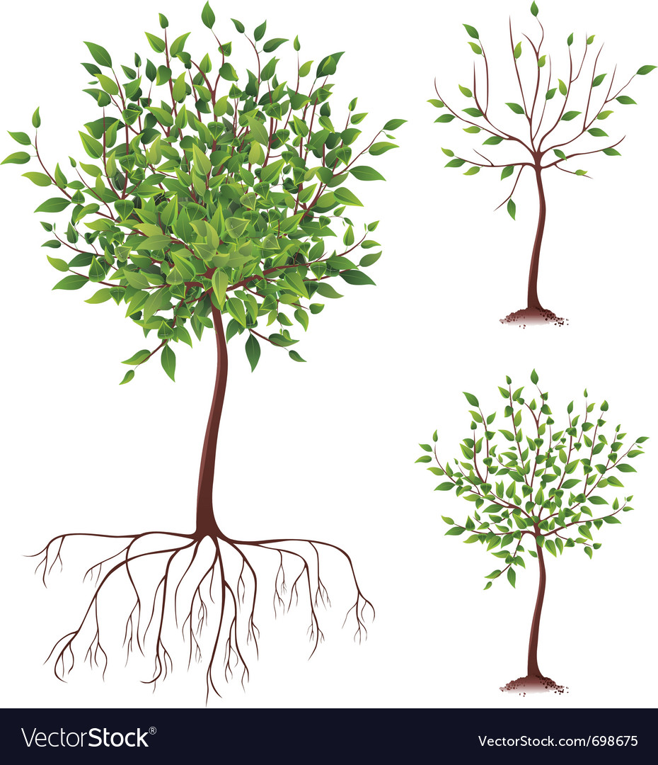 Realistic green tree with roots vector | Price: 1 Credit (USD $1)