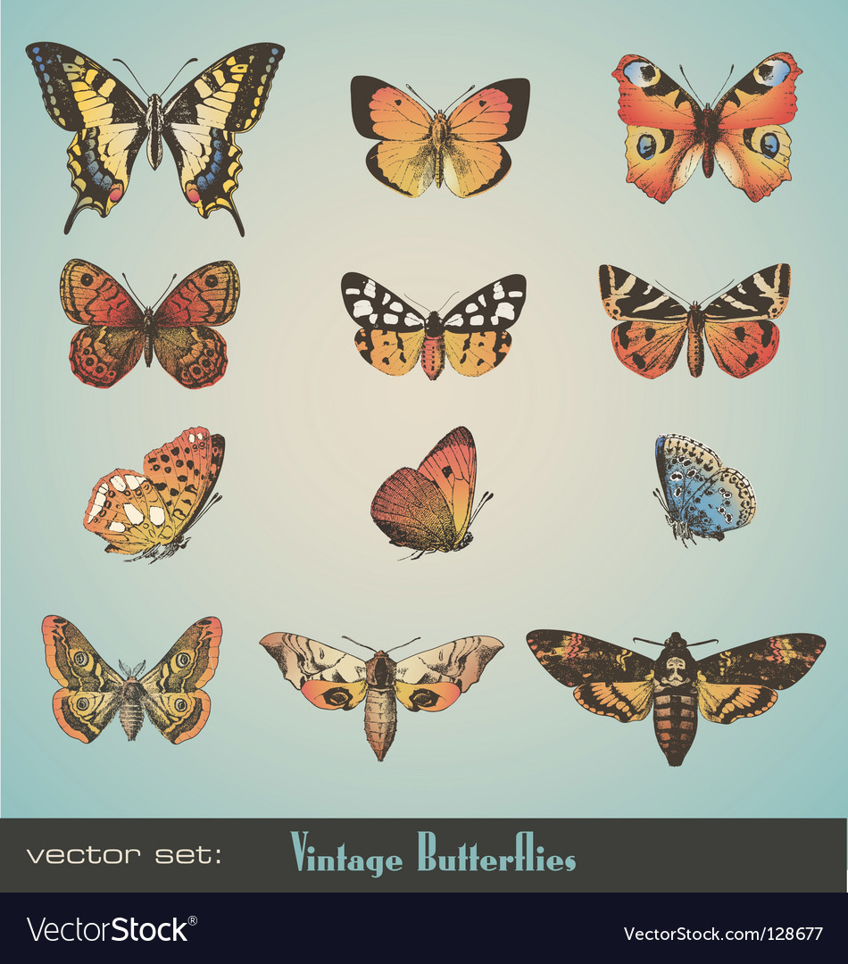 Butterflies vector | Price: 3 Credit (USD $3)