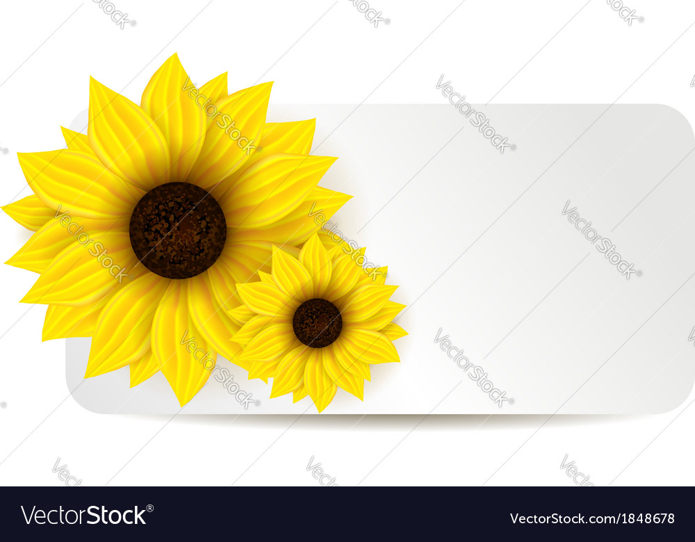 Sunflower banner vector | Price: 1 Credit (USD $1)
