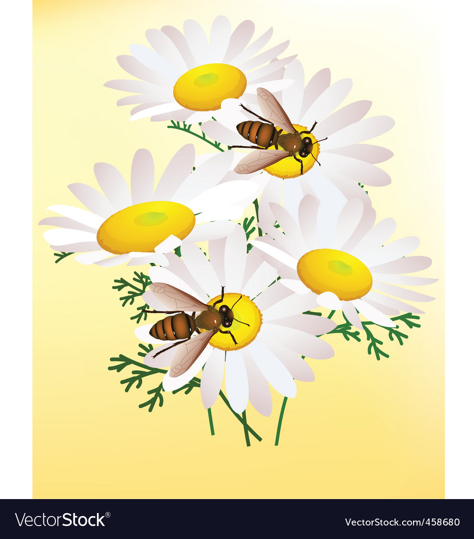 Bee on chamomile vector | Price: 3 Credit (USD $3)