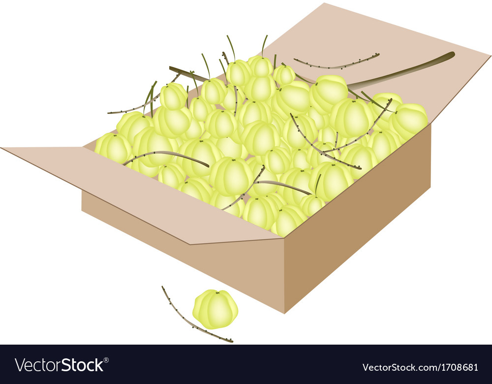 Star gooseberry fruits in a shipping box vector | Price: 1 Credit (USD $1)