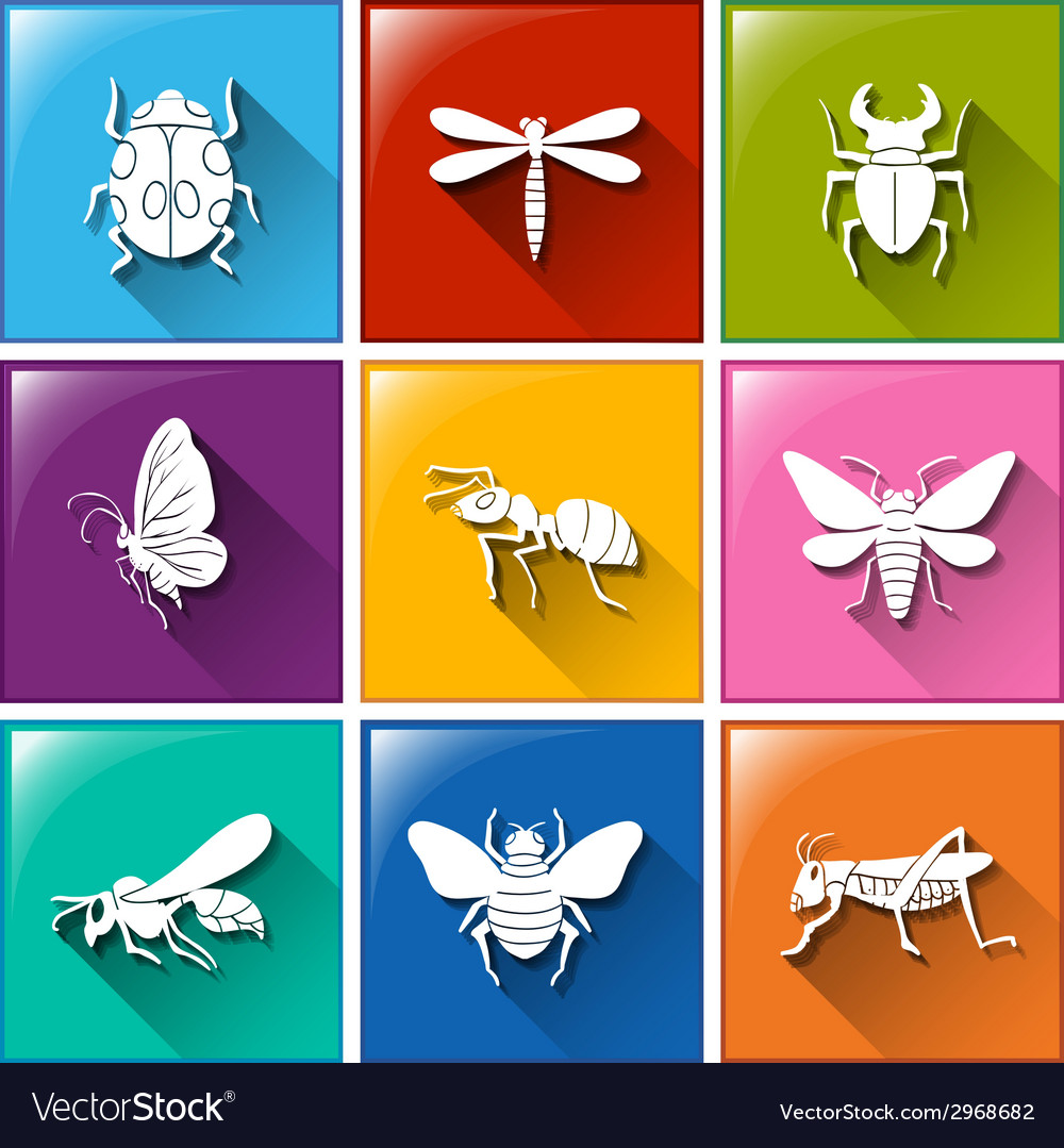 Buttons with the different type of insects vector | Price: 1 Credit (USD $1)