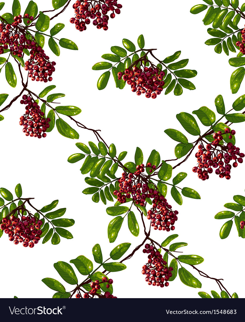 Ashberry rhombic branch seamless pattern with vector | Price: 1 Credit (USD $1)