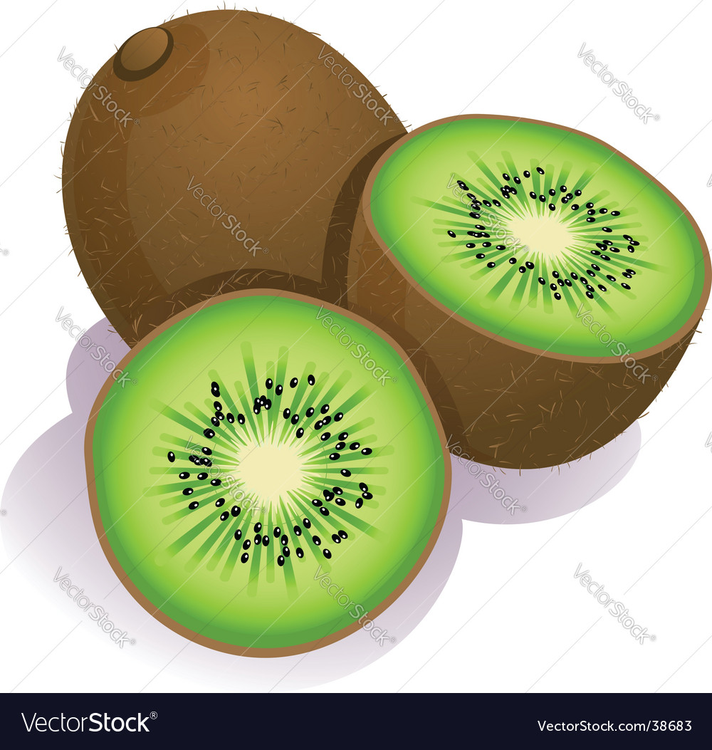 Kiwi fruit vector | Price: 1 Credit (USD $1)