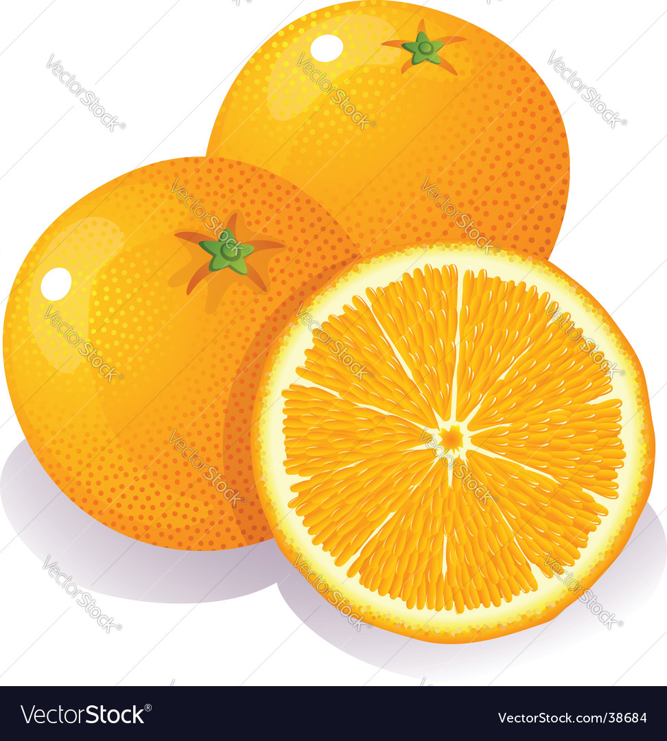 Oranges vector | Price: 1 Credit (USD $1)