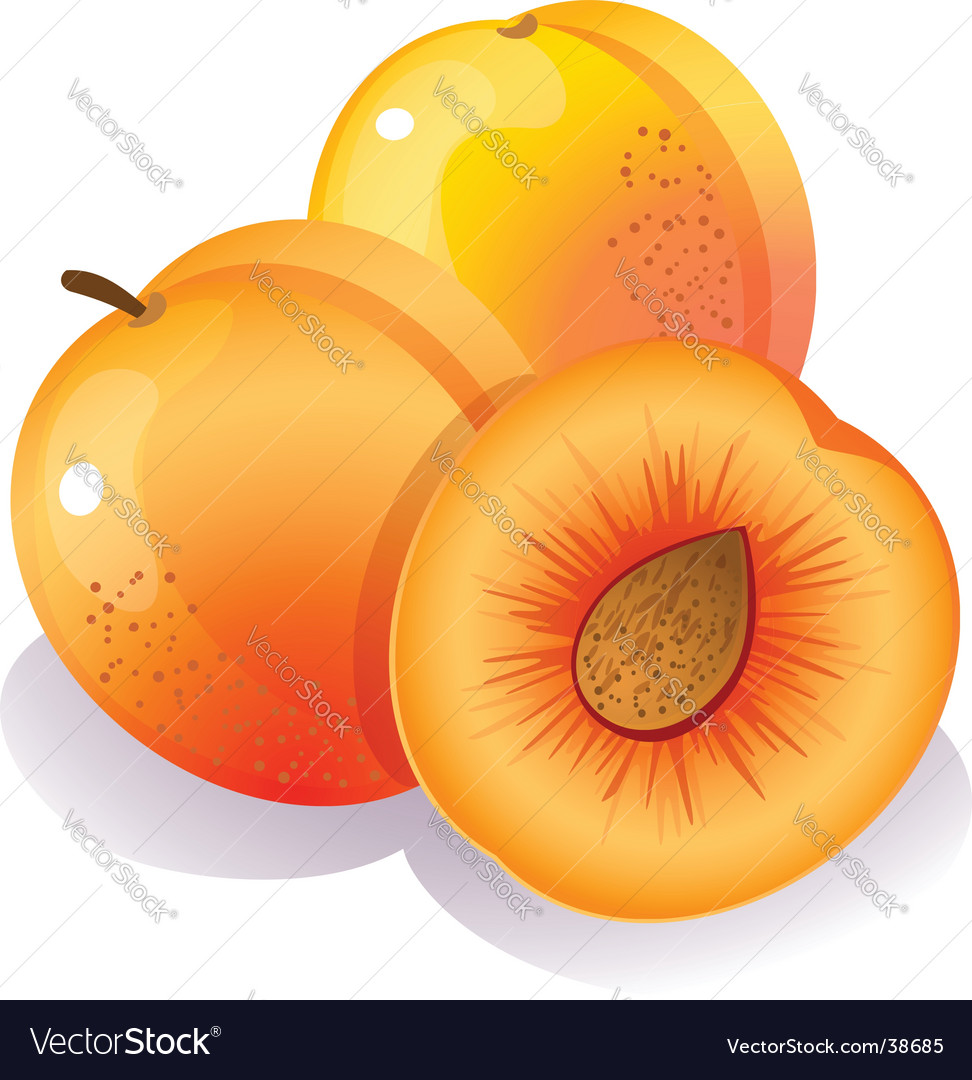 Peach vector | Price: 1 Credit (USD $1)