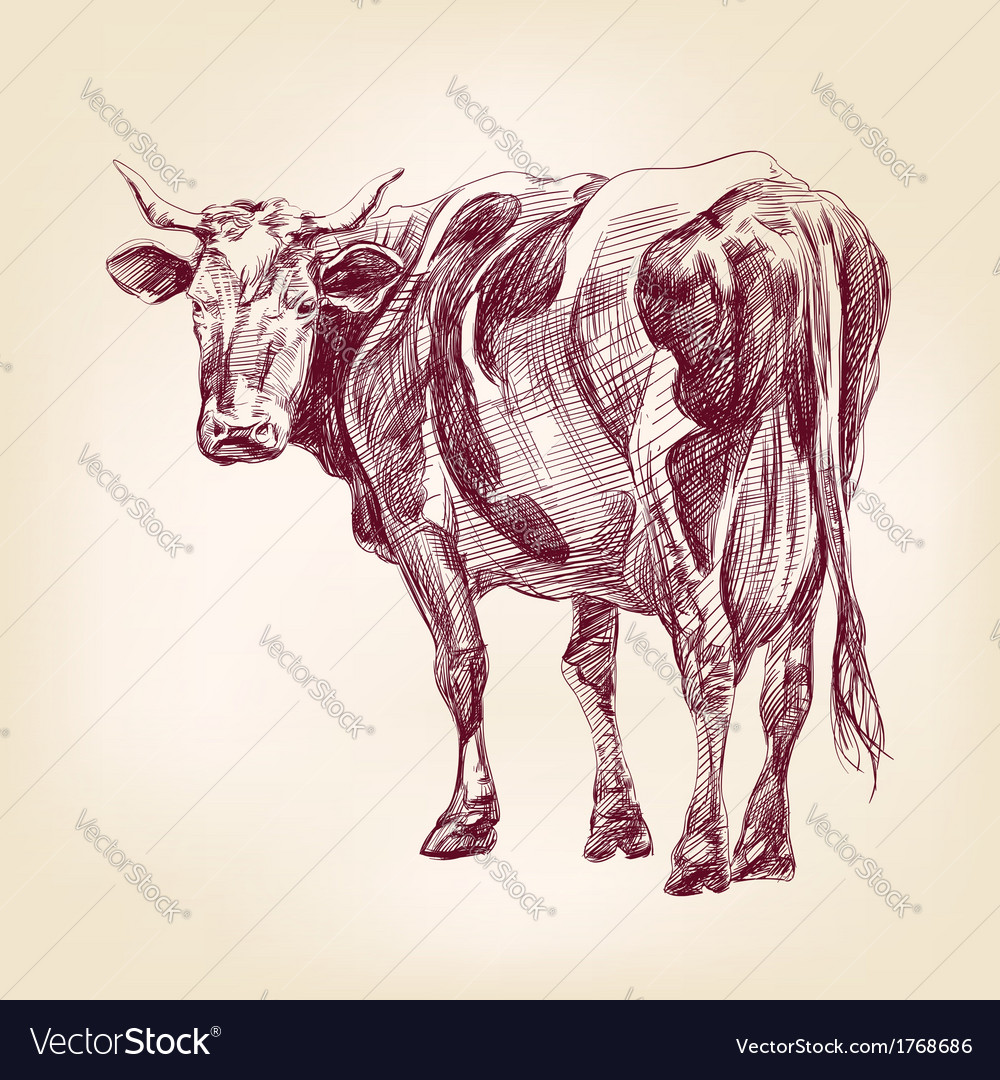 Cow hand drawn llustration realistic sketch vector | Price: 1 Credit (USD $1)