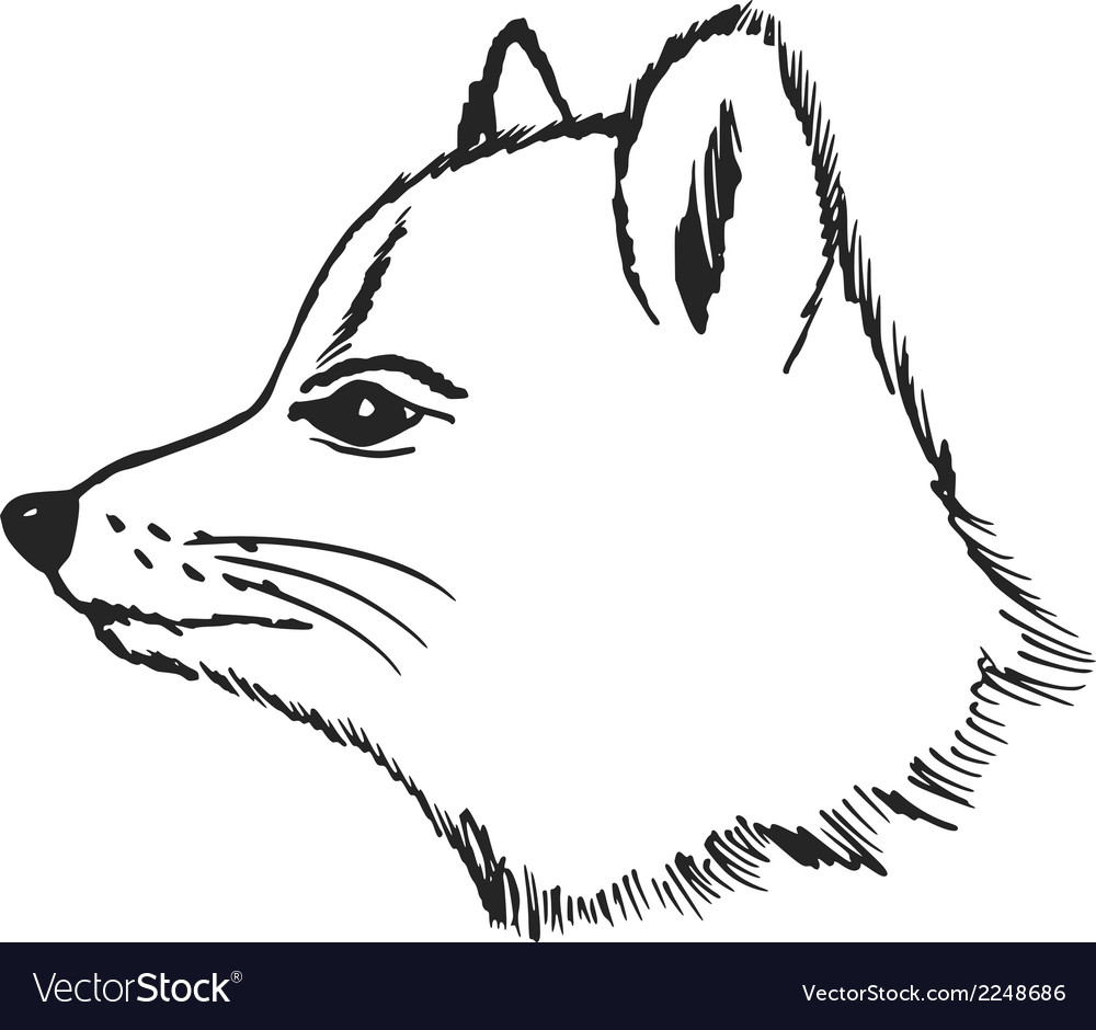 Polar fox vector | Price: 1 Credit (USD $1)