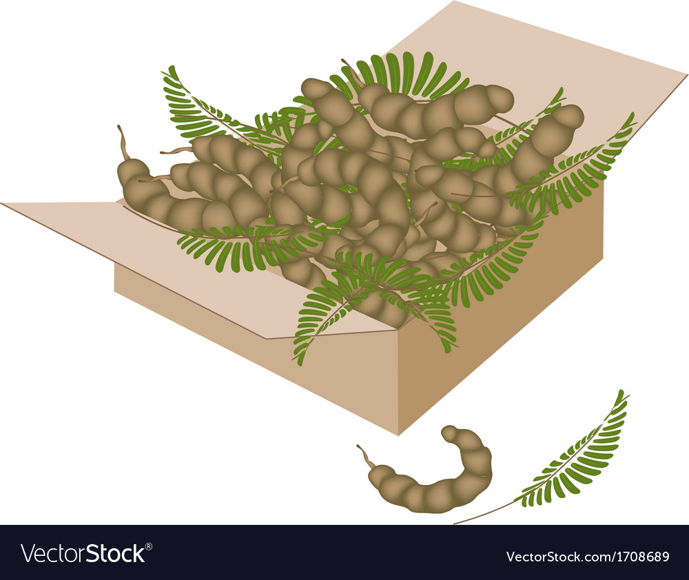 Tamarind pod and leaves in a shipping box vector | Price: 1 Credit (USD $1)