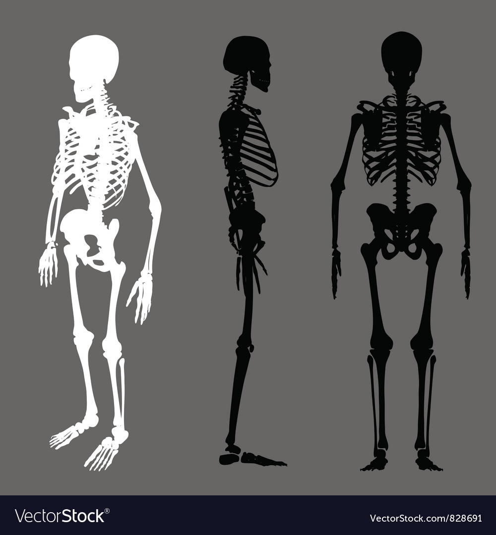 Skeleton silhouette vector | Price: 1 Credit (USD $1)