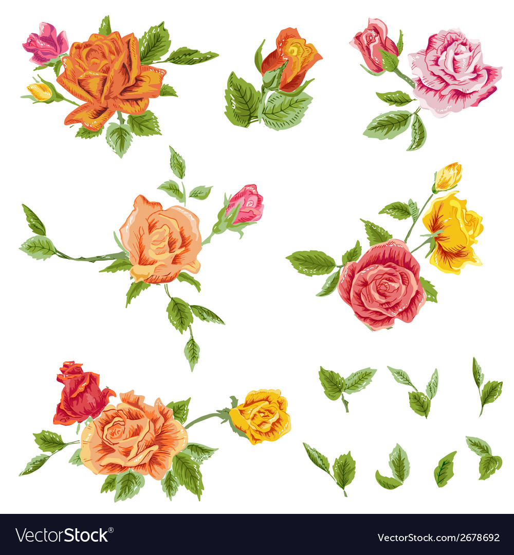 Watercolor roses set - floral background vector | Price: 1 Credit (USD $1)