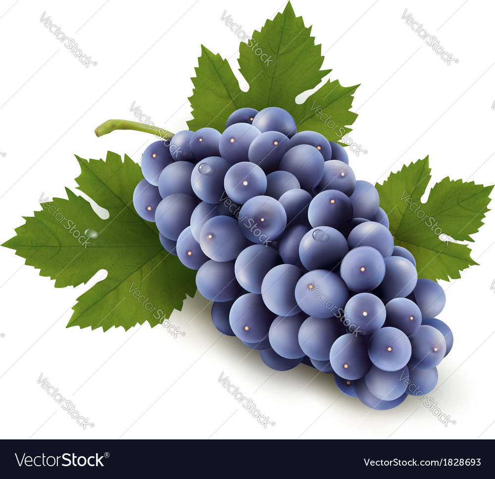 Ripe grapes with leaf vector | Price: 1 Credit (USD $1)