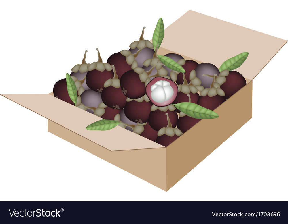 Fresh purple mangosteens in a shipping box vector | Price: 1 Credit (USD $1)