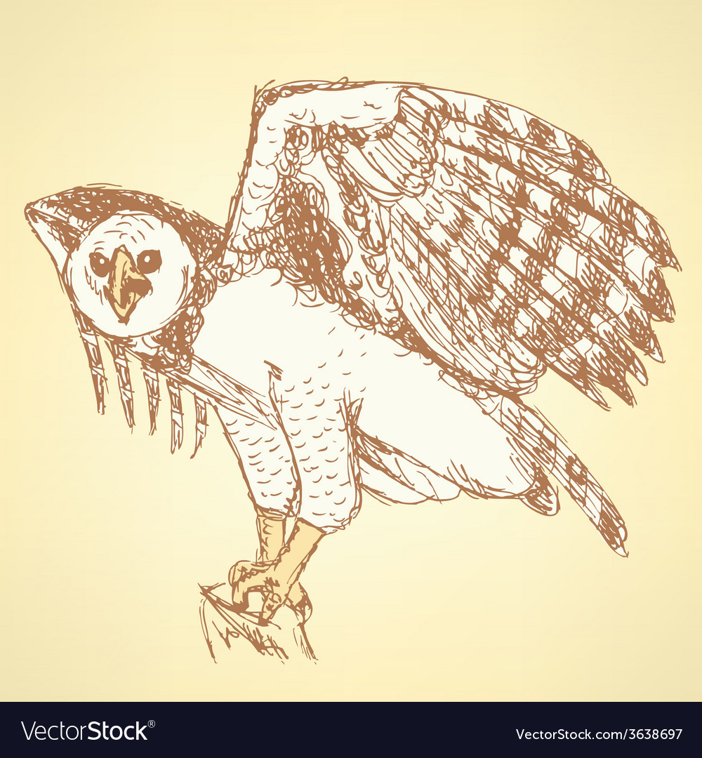 Sketch harpia bird head in vintage style vector | Price: 1 Credit (USD $1)