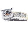 Cat breed siberian cat vector