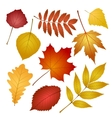 Autumn leaves isolated on white background vector