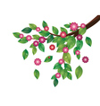 Pink flowers and green leaves branch vector