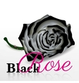Black rose on white background vector