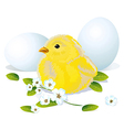 Easter chicken and eggs vector