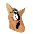 Woodpeacker vector