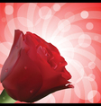 Red rose with droplets and circular background vector
