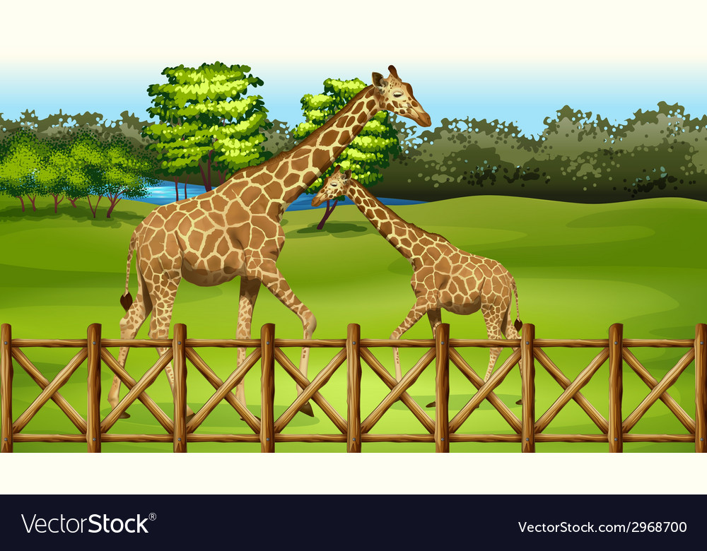 Giraffes in the forest vector | Price: 1 Credit (USD $1)