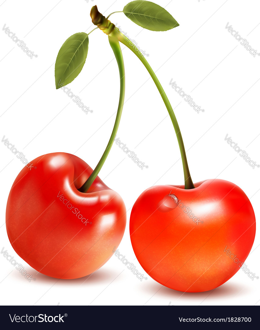 Ripe red cherry berries with leaves vector | Price: 1 Credit (USD $1)