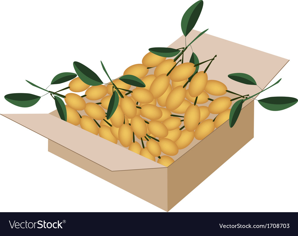 Fresh juicy burmese grape in a shipping box vector | Price: 1 Credit (USD $1)