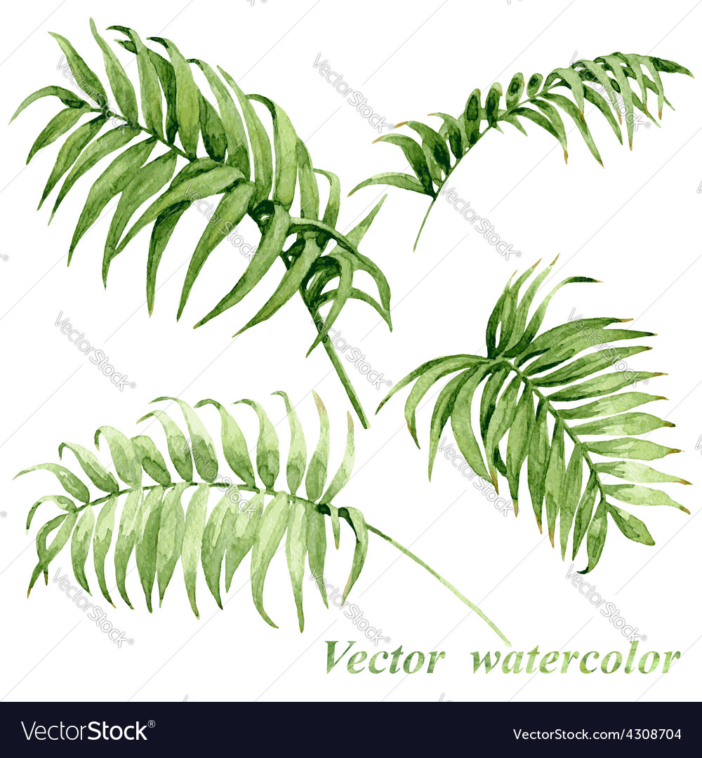 Palm leaves set vector | Price: 3 Credit (USD $3)