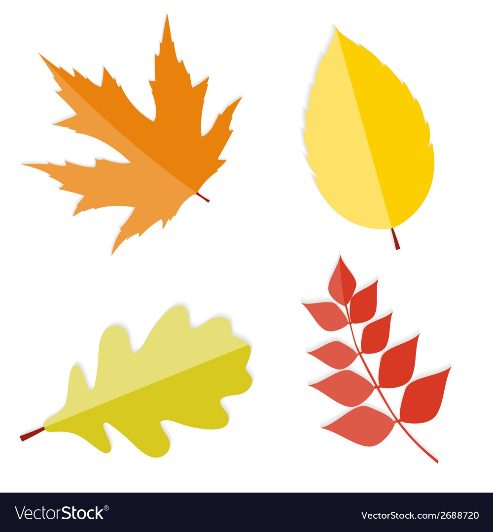Shiny autumn natural leaves vector | Price: 1 Credit (USD $1)