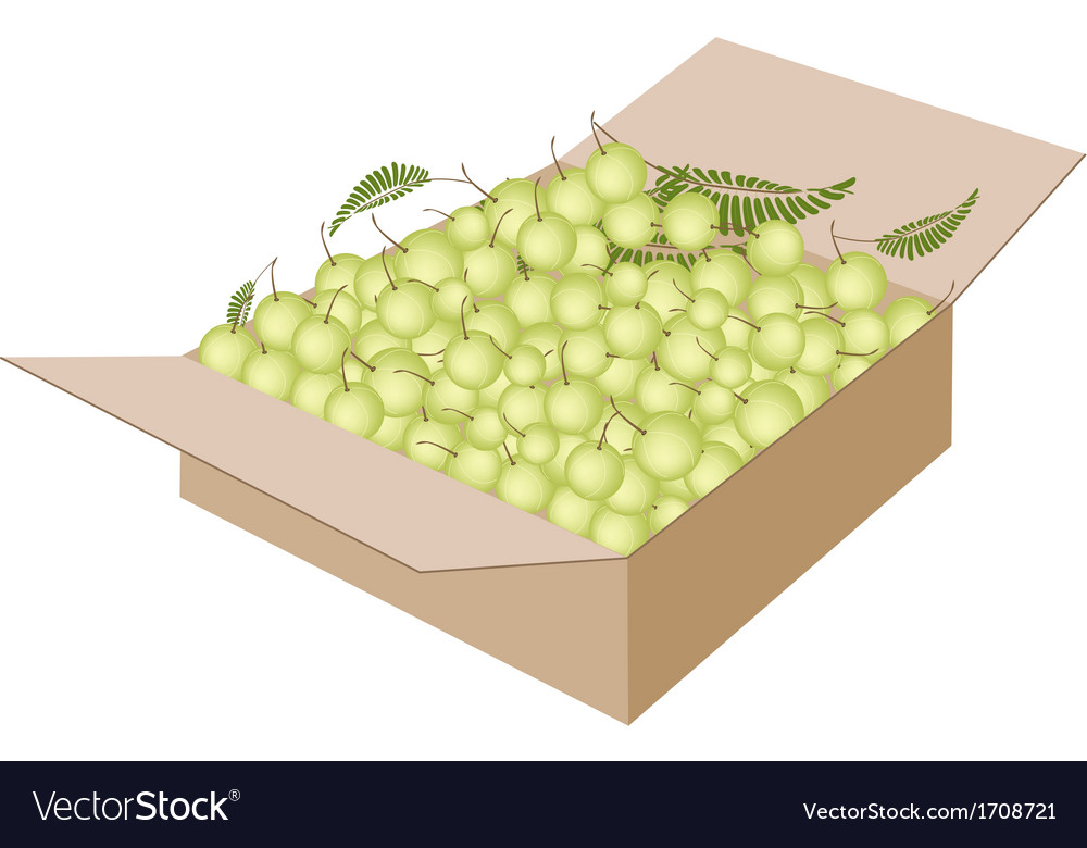 Indian gooseberry fruits in a shipping box vector | Price: 1 Credit (USD $1)