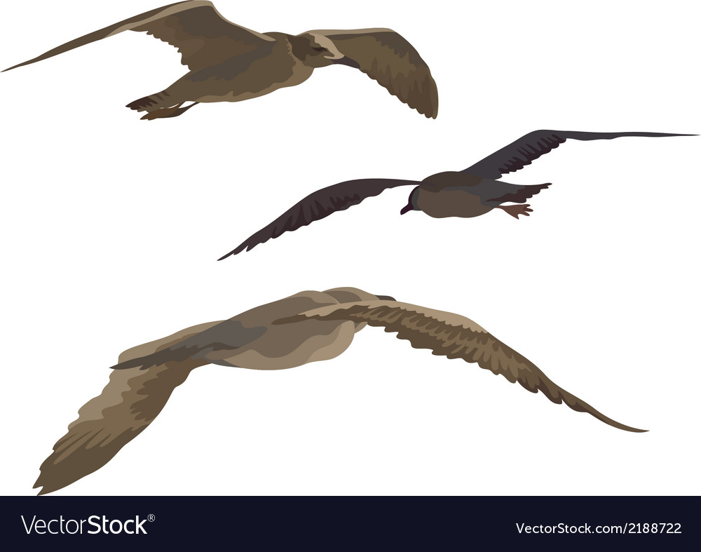 Birds gulls set vector | Price: 1 Credit (USD $1)