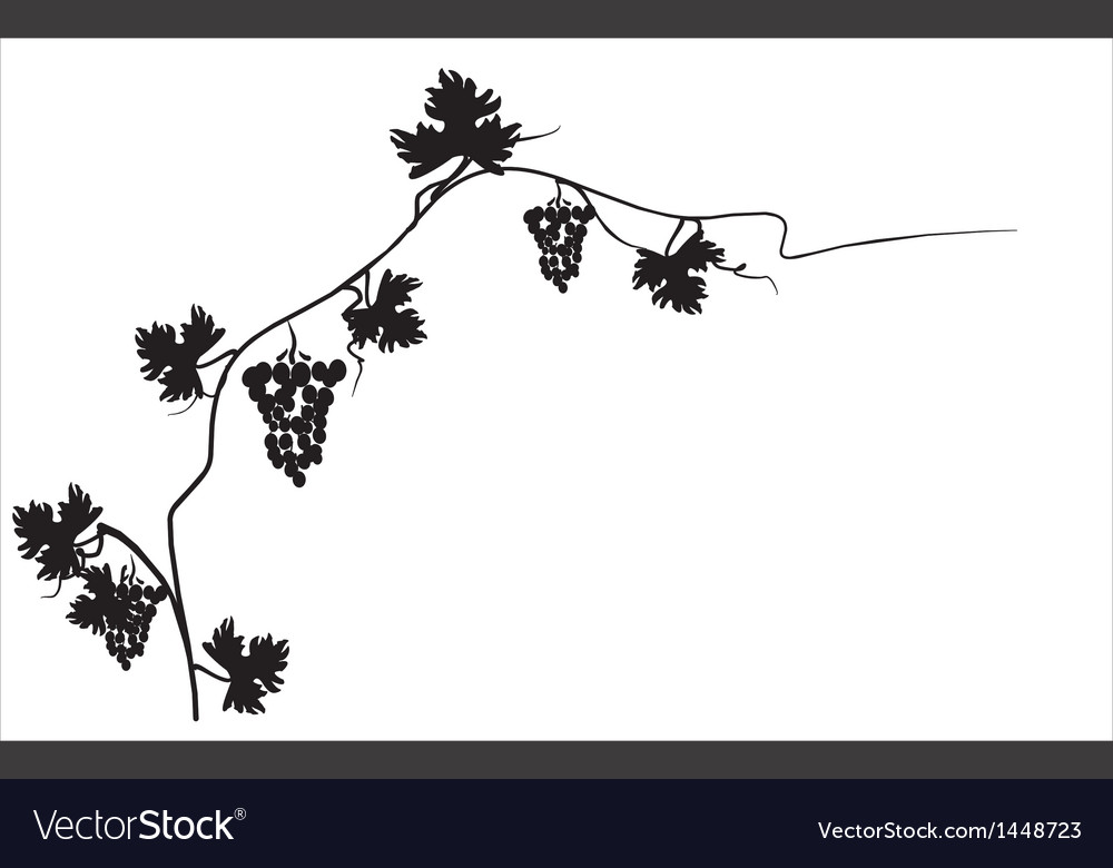 Black silhouette of grapes on the vine vector | Price: 1 Credit (USD $1)