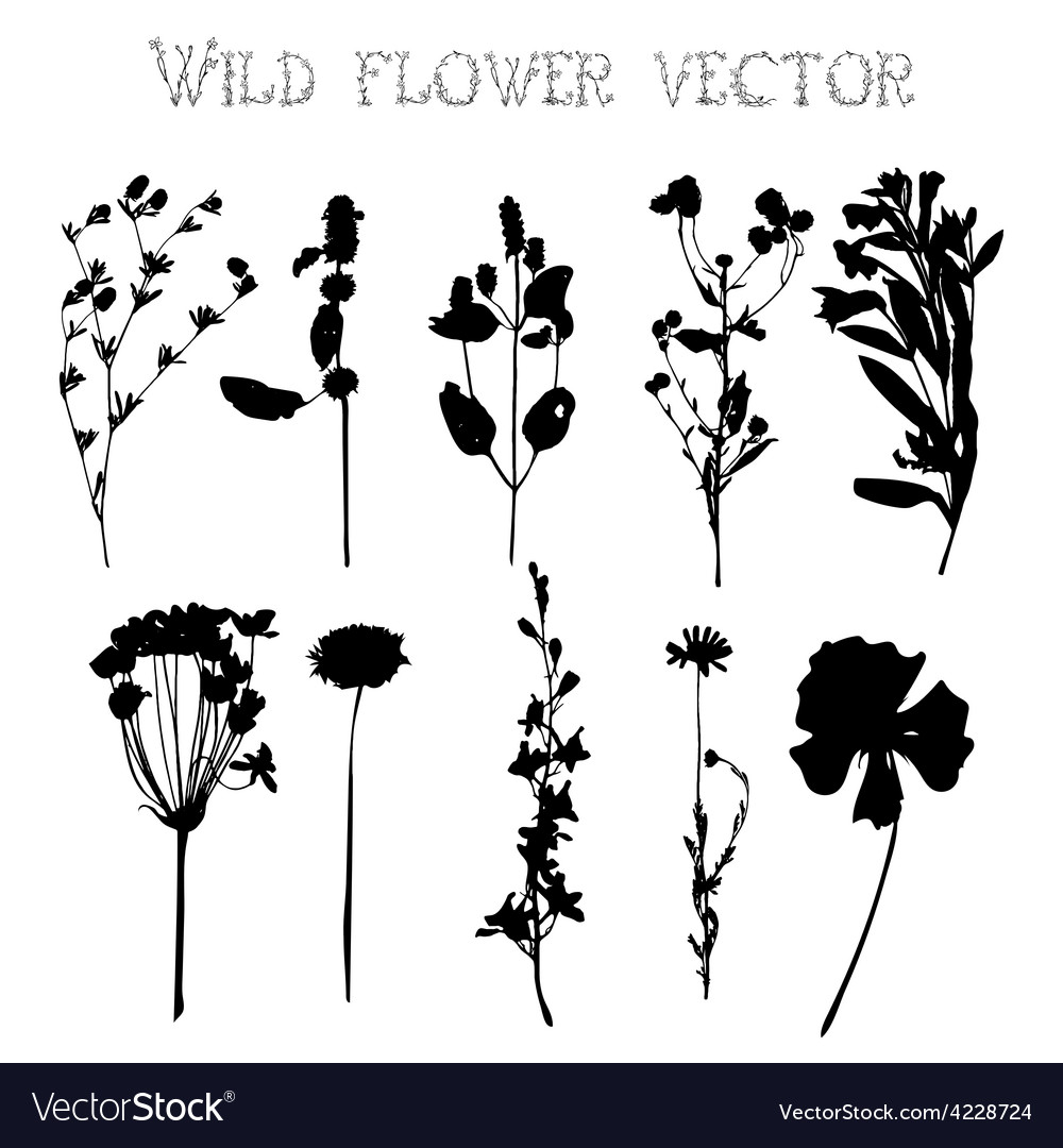 Silhouettes of wild flowers and leaves vector | Price: 1 Credit (USD $1)
