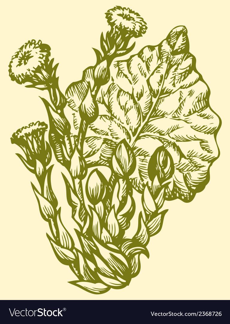 Spring primroses coltsfoot vector | Price: 1 Credit (USD $1)