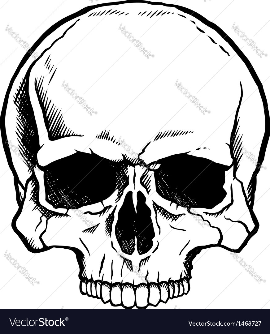 Black and white human skull vector | Price: 1 Credit (USD $1)
