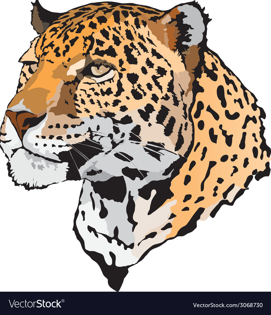 Leopard vector | Price: 1 Credit (USD $1)