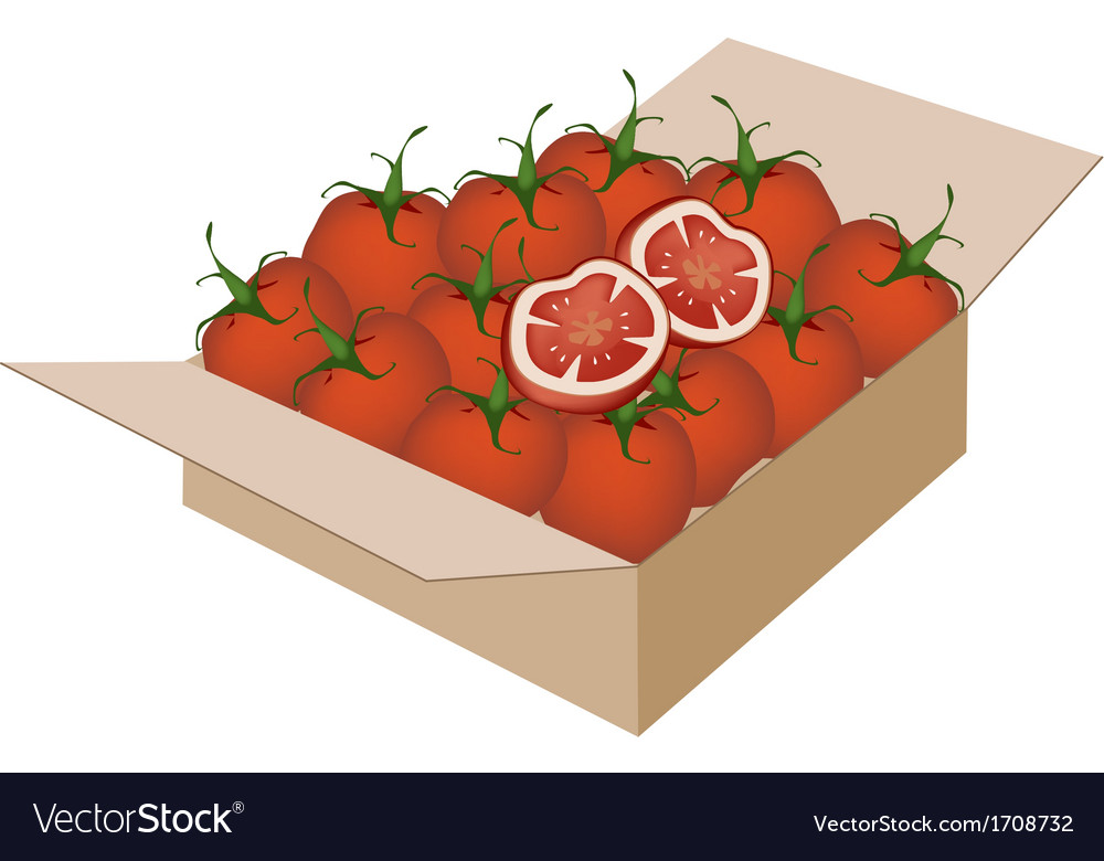 Fresh red tomatoes in a shipping box vector | Price: 1 Credit (USD $1)