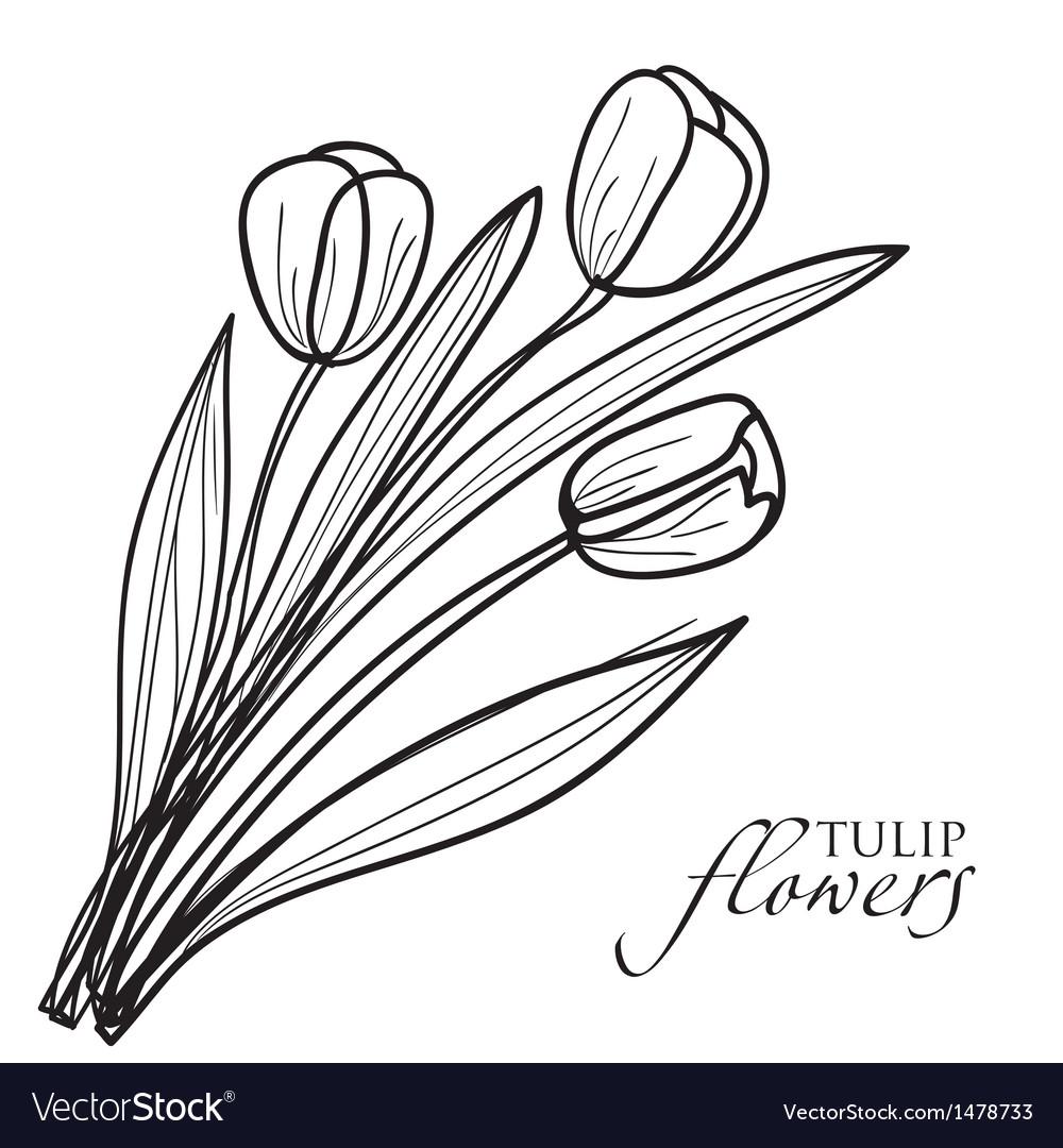 Tulip flowers sketch vector | Price: 1 Credit (USD $1)