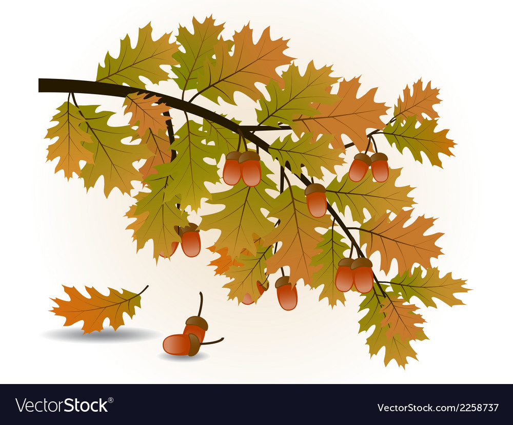 Oak branch vector | Price: 1 Credit (USD $1)